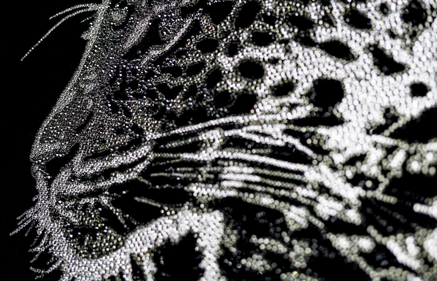 LEOPARDO_detail